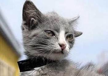 Ood Cat